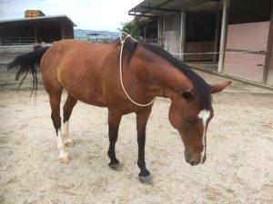 Halsring Pferd