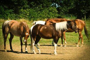 Pferde im Auslaufbereich